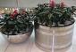 东海申冠圆桶形不锈钢花盆
