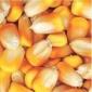 襄�傲�r�F代�r�I求�玉米豆粕棉粕��皮次粉油糠等�料原料